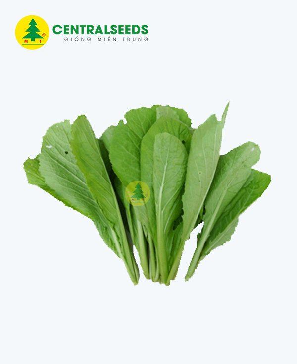 Hạt giống cải xanh