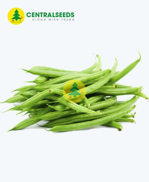 Hạt giống đậu cove trắng