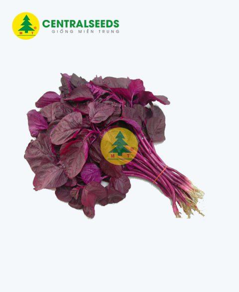 Hạt giống rau dền